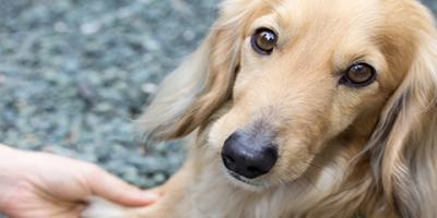 5 Tips to Ease Separation Anxiety During Pet Boarding, Keaau, Hawaii