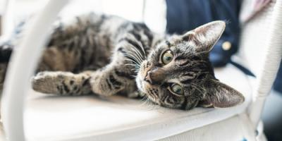 3 Surprising Indicators You Should Take Your Cat to the Vet, Ewa, Hawaii