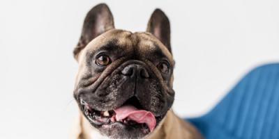 What Your Dog's Dry Nose Is Telling You, Wahiawa, Hawaii