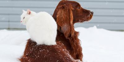 5 Pet Care Tips for Keeping Outdoor Animals Warm This Winter, High Point, North Carolina