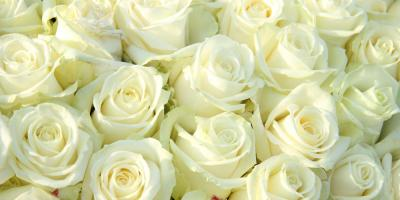 The History & Symbolism Behind White Roses, High Point, North Carolina