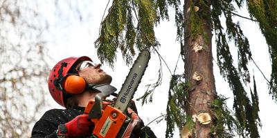 3 Reasons DIY Tree Removal Is Dangerous, High Point, North Carolina