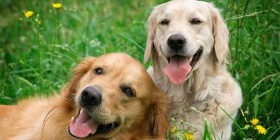3 Ways to Prepare Your Dog for Boarding, Highland Village, Texas