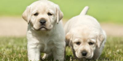 Why You Should Bring Your Puppy to Dog Daycare, Highland Village, Texas