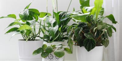 4 Best House Plants, Hilo, Hawaii