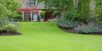 How to Improve Your Grass, North Hobbs, New Mexico