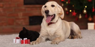 3 Pet Care Tips to Keep Your Furry Friends Calm During the Holidays  , Bolivar, Missouri