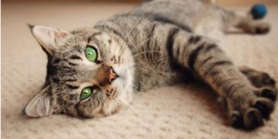 4 Factors Pet Owners Should Consider When Selecting a Carpet , Holmen, Wisconsin