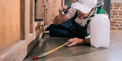 3 Common Residential Pests in Long Island, NY, Huntington, New York