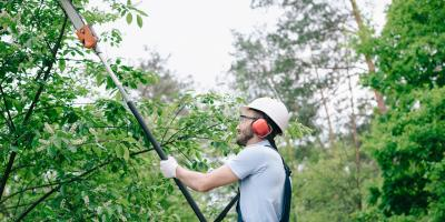 Don't Fall for These Common Myths About Tree Maintenance, 1, Tennessee