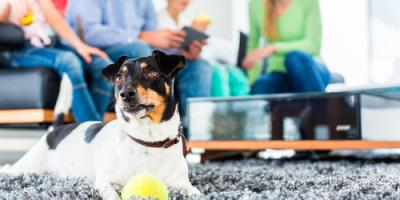 Top 4 Carpet Cleaning Tips for Pet Owners, Honolulu, Hawaii