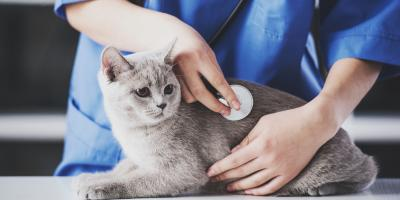 Why Your Cat Should Visit the Veterinarian Regularly, Honolulu, Hawaii