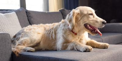 4 Effective Ways to Minimize Dog Shedding, Honolulu, Hawaii