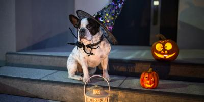 Do's & Don'ts to Keep Your Pet Safe This Halloween, Honolulu, Hawaii