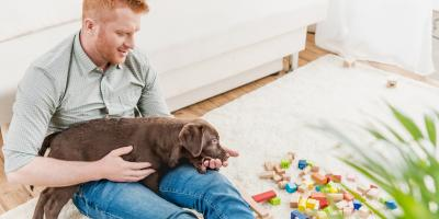 What Dog Owner Should Know About Essential Oils, Ewa, Hawaii