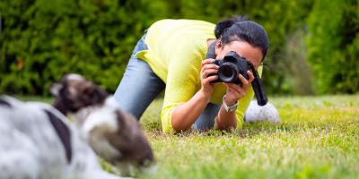 3 Reasons Why You Should Invest in Professional Pet Photography, Honolulu, Hawaii