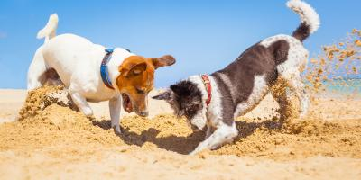 Help Pets Beat the Heat With These Veterinarian-Approved Tips, Honolulu, Hawaii