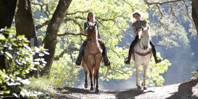 3 Pieces of Horse Tack That Are Essential for Riding, Whiteville, Arkansas