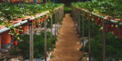 3 Benefits of Growing Crops Indoors, Genoa, Michigan