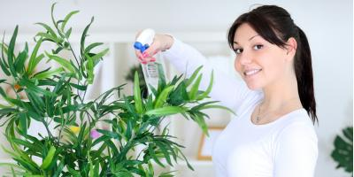 Top 3 Indoor Plants to Give Your Home Style, Anchorage, Alaska