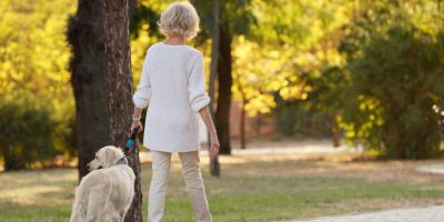 How to Care for an Aging Pet, Springfield, Ohio