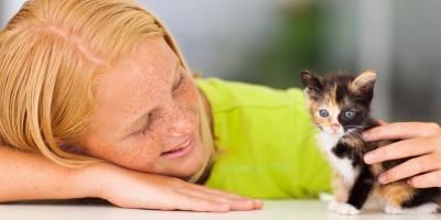 How to Raise a Social Cat, Lincoln, Nebraska