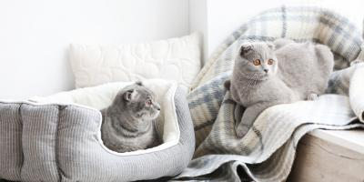 Cat Boarding Experts Help You Create a Peaceful Multi-Cat Home, Newport-Fort Thomas, Kentucky