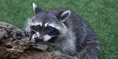 Animal Control Experts Explain How to Keep Critters Away From Your Property, Linden, Texas