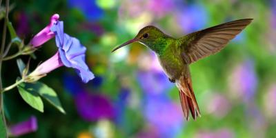 5 Plants That Attract Hummingbirds Available at Wholesale Plant Supplier Waynesboro Nurseries , Lyndhurst, Virginia