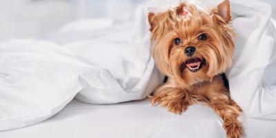 3 Ways Pets Can Impact Your HVAC System, Yorktown Heights, New York