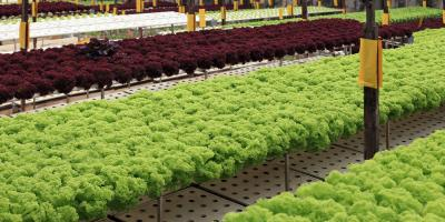 What Are Hydroponics?, Anchorage, Alaska