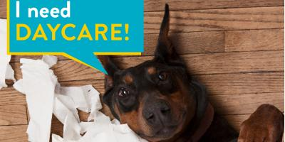 5 Ways Dog Day Care Can Benefit Both You & Your Pet, Highland Village, Texas