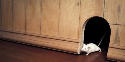 Bethalto Exterminator Explains Why You Should Protect Your Home With Mice Control, Bethalto, Illinois