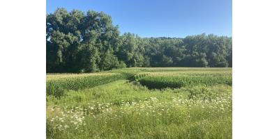 Tillable and hunting land available!  Offered by Brady Lawrence @ LAWRENCE REALTY, INC., Red Wing, Minnesota