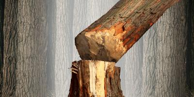 3 Ways to Know When to Call an Emergency Tree Service, Jefferson, Georgia