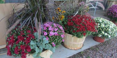 3 Compelling Benefits of Placing Mums Around Your Home, Byron, Wisconsin