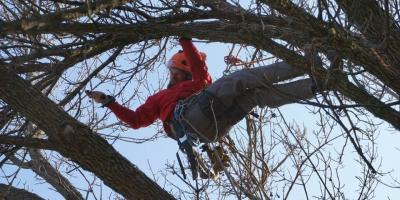 Why Proper Tree Pruning Is Important, Cincinnati, Ohio