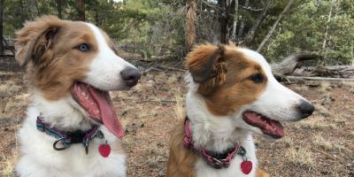 Promote Pet Wellness With Animal Care Alternatives, Buena Vista, Colorado