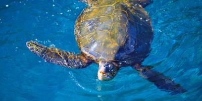 Fun Facts About Hawaiian Marine Life, Kekaha-Waimea, Hawaii