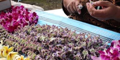 Understanding Hawaiian Culture: Lei Day, Koolauloa, Hawaii