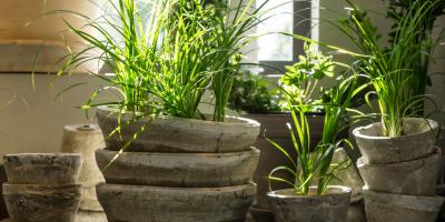 3 Tips For Taking Care of Your Plants During the Winter, Colerain, Ohio