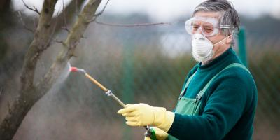 5 Types of Insect & Disease Treatments for Your Trees, Arpin, Wisconsin