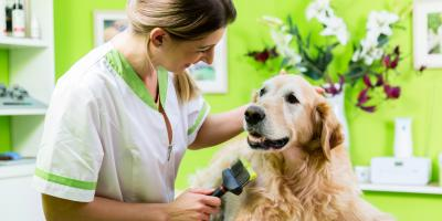 4 Types of Insurance Needed When Working With Animals, Kalispell, Montana