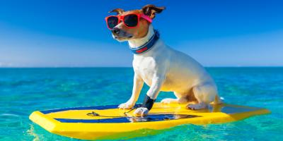 5 Signs Your Dog is Overheating, Newtown, Connecticut