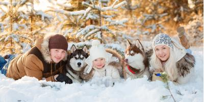 3 Ways Pet Containment Systems Can Protect Your Pet This Winter, Newtown, Connecticut