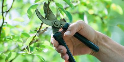 Is It Time to Take Out the Tree Pruning Equipment? , Stamford, Connecticut