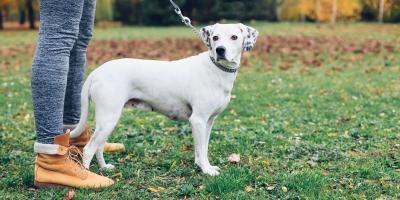 3 Dog Etiquette Tips for Public Parks, Jacksonville, Arkansas