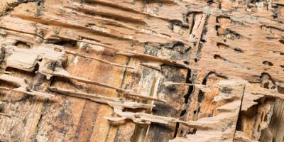 5 Tips for Preventing Termites, Jefferson City, Missouri