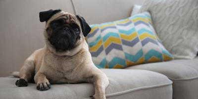 4 Tips for Keeping Pets Off the Furniture, Grand Rapids, Wisconsin