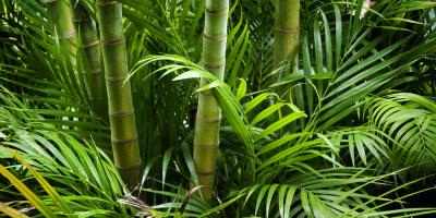 Save Your Landscaping With Bamboo Remediation, Jessup, Maryland